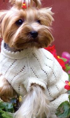 Вязание для маленьких собак