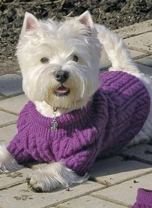 вязание спицами для собак